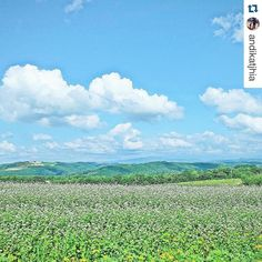 One of the greatest photographers #Repost @andikatjhia with @repostapp.  Welcome June  it's summertime . . . #hellosummer#landscapelovers#skylovers#naturelovers#japanlover#japanwireless by japanwirelesstokyo