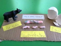 Classical Conversations - Science - Cycle 1 - Week 7 How do animals reproduce?