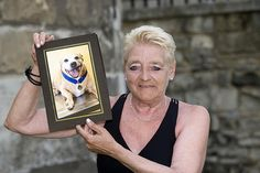 The Staffordshire bull terrier who protected her owner from a machete gang. You do not see this in the news tho!
