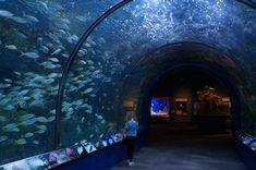 Audubon Aquarium , New Orleans #aquarium #neworleans #familytravel