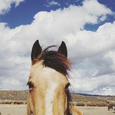 Cloudy Horse Head Art Print