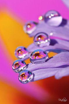 Water Drops:
