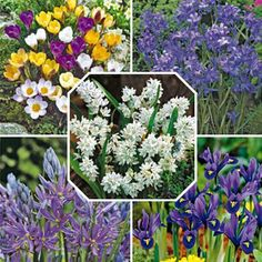 Summer Rock Garden This rock garden features 4 unique varieties, giving you lots of bright color and lush foliage from spring into summer #fundraising #flowers #gardening #fundraisingidea