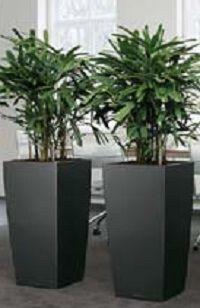 luchtzuiverende kamerplanten.