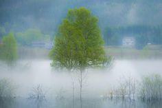 Misty flood! by Jørn Allan Pedersen on 500px