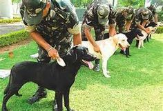 Life For Animals: Dogs dying in Line of Duty - Indian Elections