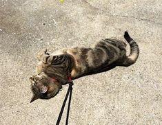 Cat Supplies Search For Flights Mangeoire Automatique Simple Pour Chiens Et Chats Fuss-dog Special Summer Sale Pet Supplies
