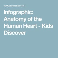 Infographic: Anatomy of the Human Heart - Kids Discover