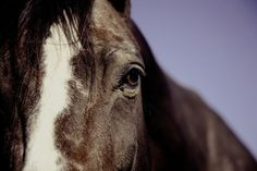 Justice for Horses Allegedly Neglected and Left to Die