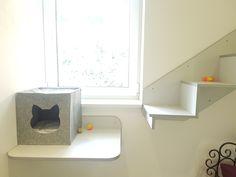 Pokoj 2 - VIP Apartmá Cat Hotel, Vip, Luxury, Cats, Gatos, Kitty Cats, Cat Breeds, Kitty, Cat