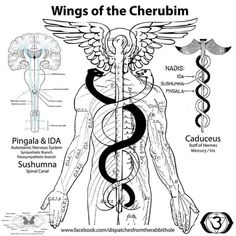 68 Best The Kundalini Serpent Energy. images