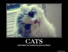 cuteness - Google Search