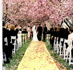 I want to get married in a field of pink trees :)