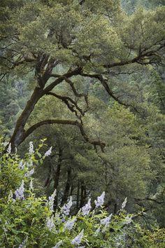 Klamath National Forest, CA