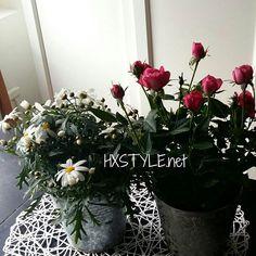 KOTI&SISUSTUS. KEVÄT Kukkia...IHANAT, Minun Suosikkeja Pikku Ruukkuruusut Keittiöön ja Marketta Puutarhaa, ulkotiloihin. Ihanaa Kevättä! Nähdään...HYMY #koti #sisustus #blogi #kevät #kukat #marketta #ruukkuruusu #suosikit #tyyli #elämä ❤☺