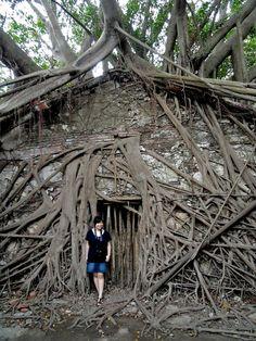 Anping tree house in Taiwan