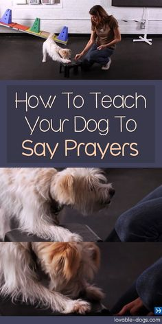 In this video, celebrity dog trainer Andrea Arden teaches her dog Nora how to say prayers. Teaching this trick involves your dog sitting and placing his front paws on a stool before dropping his head in apparent prayer mode. Celebrity Dogs, Easiest Dogs To Train, Dog Hacks, Old Dogs, Dog Training Tips, Training Schedule, Dog Behavior, New Puppy, Dog Care