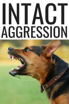 How To Deal With Aggressive Dog Behavior Problems - Dog Health Care and Information Dog Heimlich, Dog Proposal, Puppy Aggression, Dog Training Camp, Indoor Dog Park, Dog Nutrition, Dog Health Care, Aggressive Dog