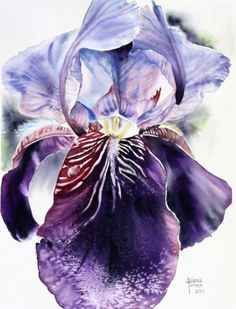 "Watercolor Painting Original, ""Prize Iris "" Watercolor Original by Diana M Turner, 11 x 14, One of a Kind."