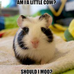 should I moo?