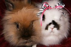 Bunny Lovers Photo Contest 2013 - Entry #12