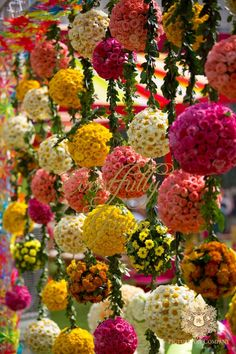 Looking for Floral balls hanging? Browse of latest bridal photos, lehenga & jewelry designs, decor ideas, etc. on WedMeGood Gallery. Marriage Decoration, Wedding Stage Decorations, Festival Decorations, Flower Decorations, Indian Wedding Flowers, Floral Wedding, Mehndi Decor, Mehendi, Wedding Mandap