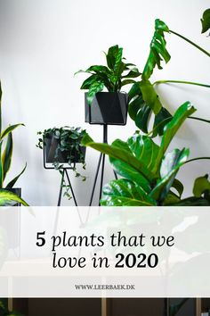Maybe you hate them now, but I promise you that you will love them before you know it Hate, Planters, Herbs, Herb, Plant, Window Boxes, Pot Holders, Flower Planters, Pots