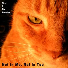 Maxi & The Jimmies Cats, Animals, Album Covers, Gatos, Animales, Kitty Cats, Animaux, Animal Memes, Cat Breeds