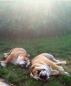 Summer Nights Bucket List: Take a nap with a friend. Mark this off your list and enter for a chance to win $500 in our Summer Nights Bucket List Sweepstakes! credit: worldofbulldog