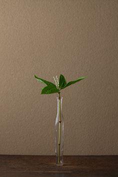 Chloranthus serratus 一日一花 川瀬敏郎(C)新潮社