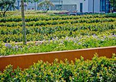 07-buro-lubbers-landscape-architecture-mathildeplein « Landscape Architecture Works   Landezine