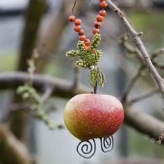 Vogel ketting met appel - Winter bird feeder #DIY