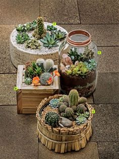 Luxury Small Cactus Ideas For Home Decoration. Here are the Small Cactus Ideas For Home Decoration. This post about Small Cactus Ideas For Home Decoration was posted Outdoor Cactus Garden, Mini Cactus Garden, Succulent Gardening, Succulent Terrarium, Cactus Flower, Container Gardening, Flower Pots, Flower Bookey, Flower Film