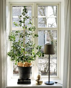 Home Interior, Interior Decorating, Tranquil Bedroom, Minimalist Room, Sweet Home Alabama, Bedroom Plants, Green Rooms, Room Themes, Plant Decor