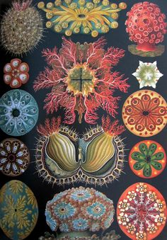 Art Forms in Nature – Eye-popping art prints from an eccentric scientist Art Forms in Nature: The Prints of Ernst Haeckel by Ernst Haeckel  Zoologist and artist Ernst Haeckel (1834 - 1919) had some odd ideas about the origins and evolution of life forms. That's understandable, because at the time, scientists were just beginning to accept Darwinism.