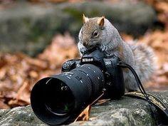 animals_cameras