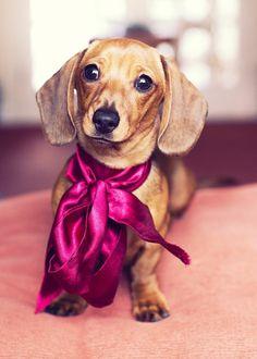 le plus mignon chien du monde, comment faire un achat chiot