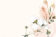 White Flowers, Beautiful Flowers, Wallpaper Backgrounds, Desktop Wallpapers, Abstract Backgrounds, Blank Space, Beige Background, Nature Images, Free Illustrations