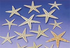 $2.99 pkg/30  These real starfish come in assorted shapes and sizes; 30 starfish per bag. table decor
