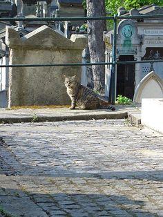 Cat+in+cemetery