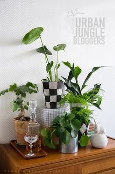 72 Best Indoor Plants Plants Interior Images On Pinterest Plant
