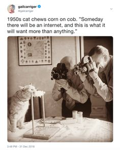 Who took the pic? Funny Animal Memes, Cute Funny Animals, Cat Memes, Funny Cute, The Funny, Cute Cats, Funny Memes, Hilarious, Gail Carriger