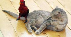 Pesten gebeurt niet alleen op het schoolplein, maar ook in het dierenrijk...