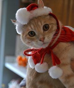 trem-das-cores:  Merry Christmas