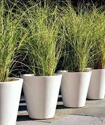 patio container garden ideas - Google Search