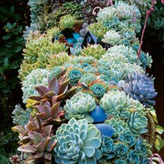 Succulent collection. Natural shapes w/depth
