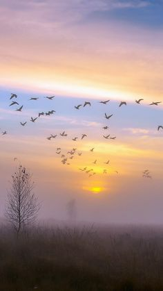 Autumn Dusk Geese Android wallpaper background for Android. Iphone 6 Plus Wallpaper, Cool Wallpaper, Wallpaper Backgrounds, Iphone Wallpapers, Text Pictures, Pictures To Paint, On Golden Pond, Mood Images, Simple Wallpapers