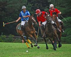 polo horse pictures | Polo in the Country – photo by Paul Keleher under Creative Commons ...