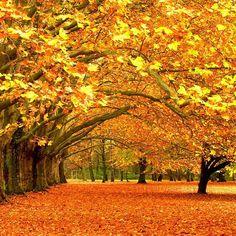 Goldener Herbst wurde in Deutschland aufgenommen