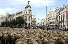 Pecore a Madrid (Lapresse)